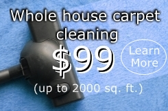 Carpet cleaning Tampa